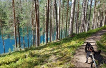 Mountain biking through the Taiga