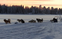 Dog sledding safari (1 p. per sledge)