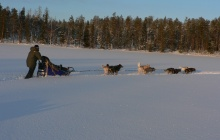Dog-sledding safari