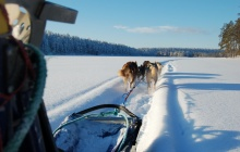 Dogsledding safari